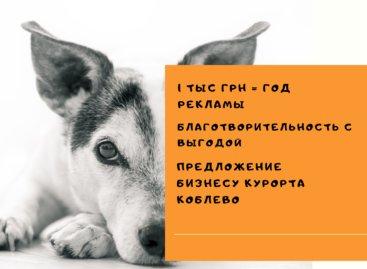 Стерилизация бездомных животных в Коблево. Благотворительность